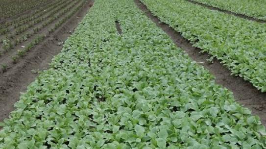 ganz neu auf www.seed-plant.at