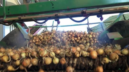 lagerhygiene im zwiebel- und gemüseanbau