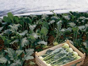 frostschutz mit lutrasil pro 1