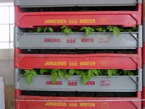 logistik tomaten