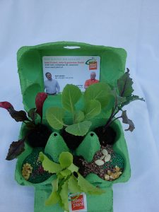 saatgut jungpflanzen